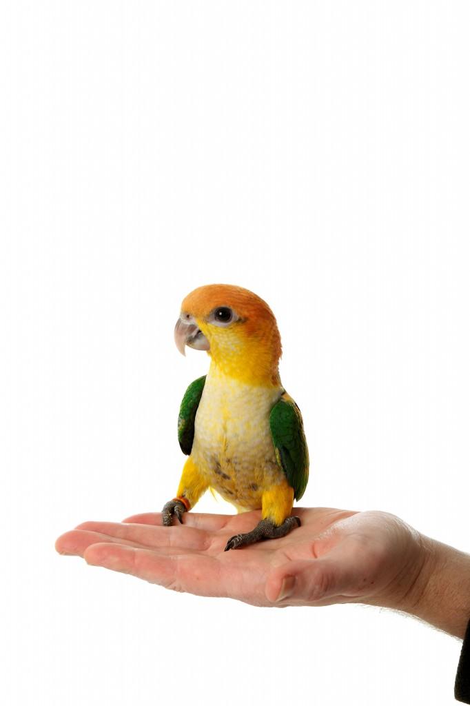 vogel verrijking