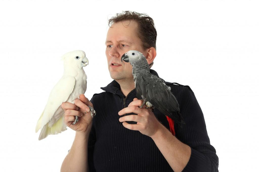 Grijze roodstaart papegaai kopen