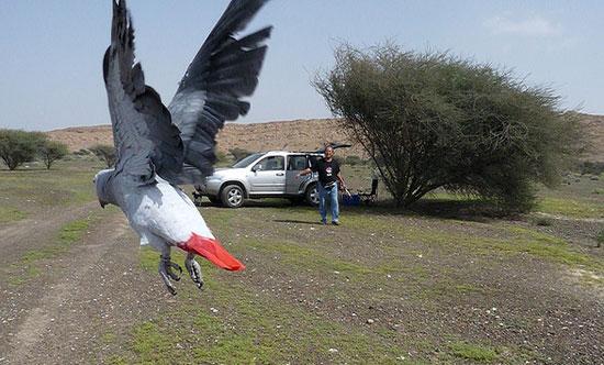 papegaai-vrije-vlucht