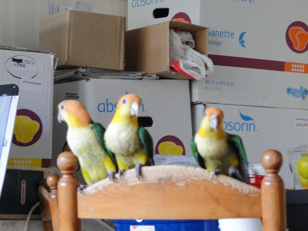 je papegaai verhuizen