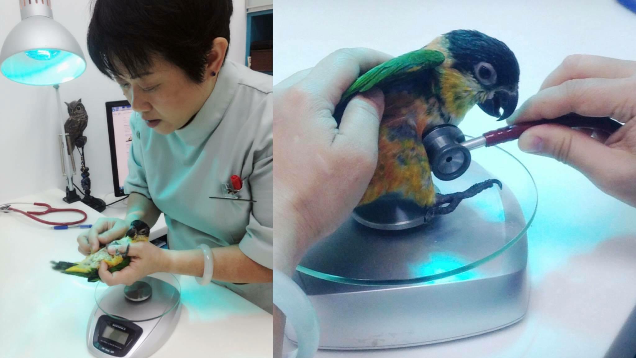 Roken ook slecht voor papegaai en parkiet