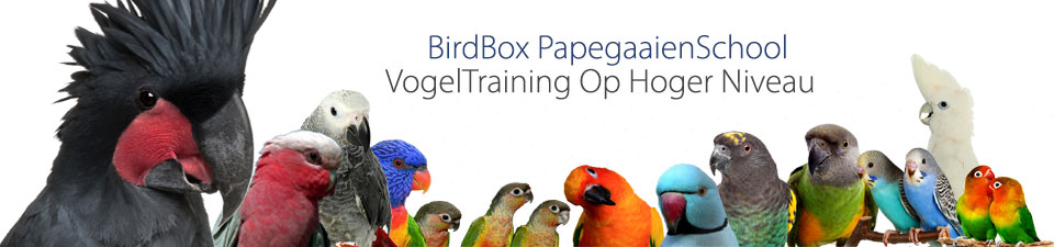 Birdbox Papegaaien School