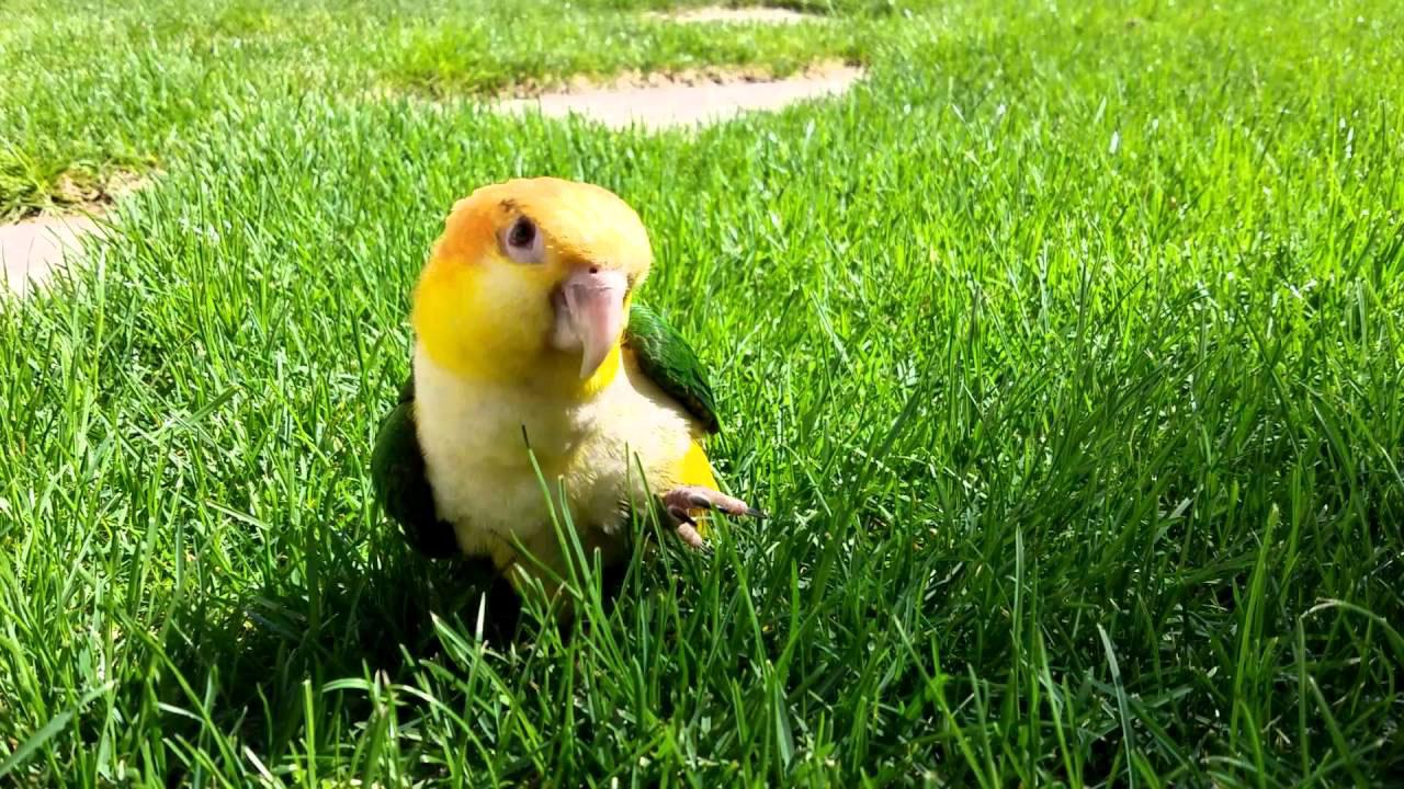 Babyvogels