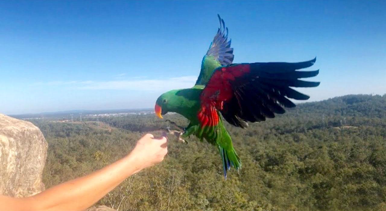 Welke papegaai of parkiet zou u mij adviseren?